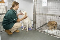 Veterinary nursing